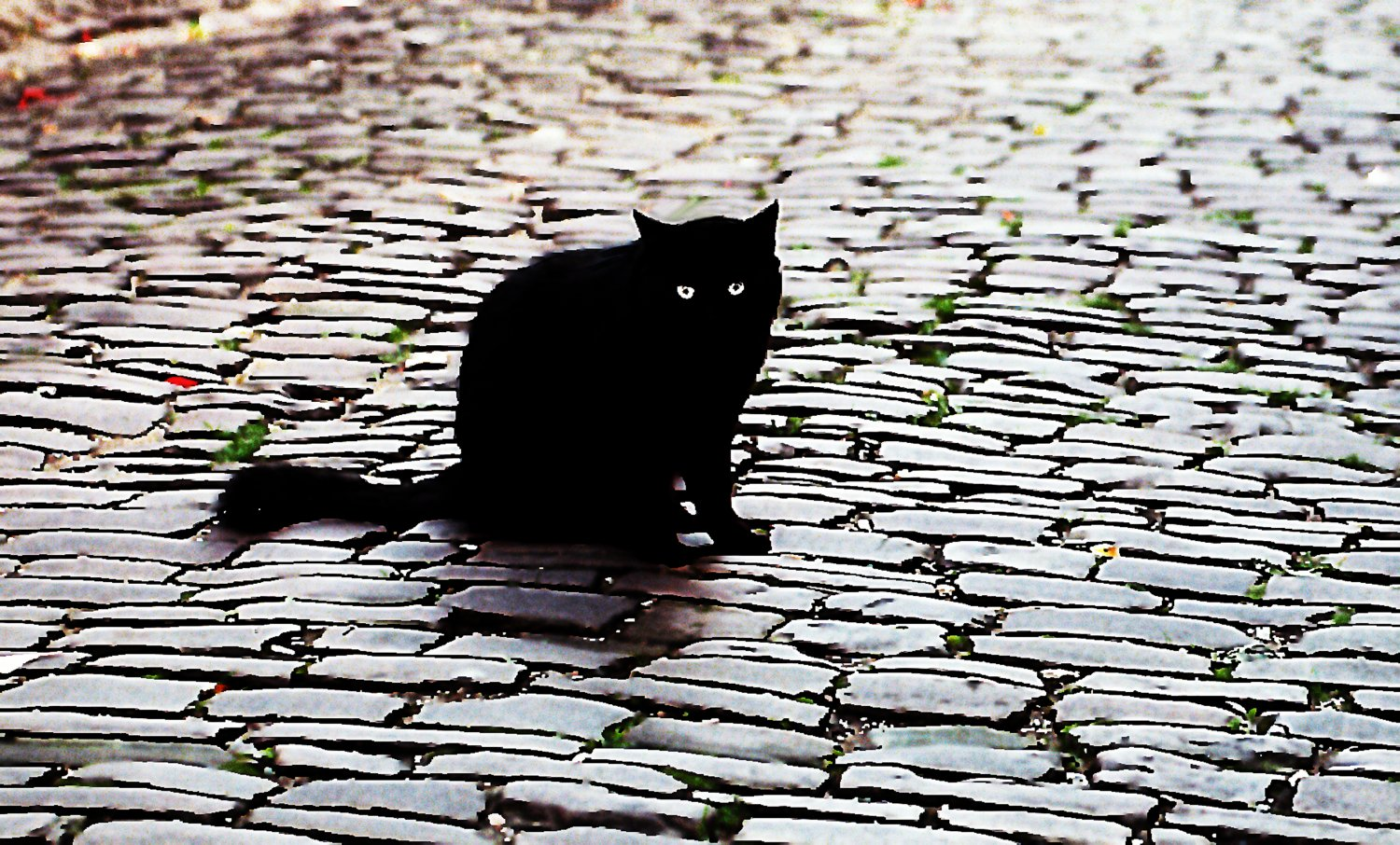 - Cordes cat - Techno-Impressionist Museum - Techno-Impressionism - art - beautiful - photo photography picture - by Tony Karp