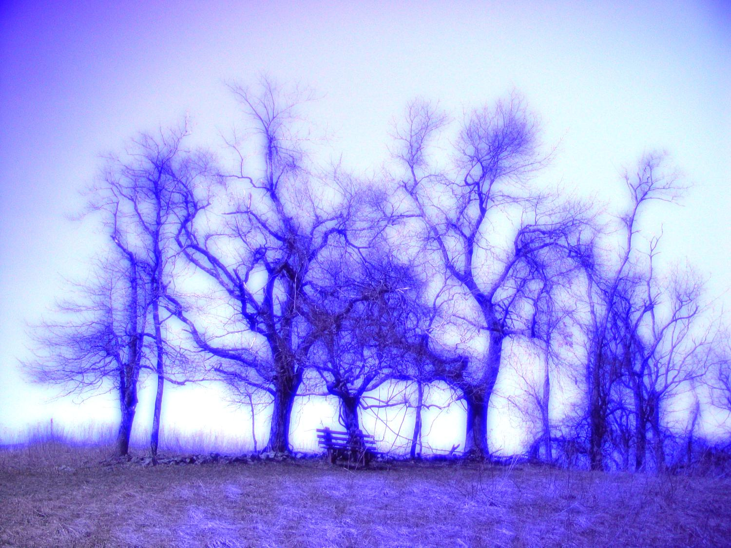 - Dancing trees - Techno-Impressionist Museum - Techno-Impressionism - art - beautiful - photo photography picture - by Tony Karp
