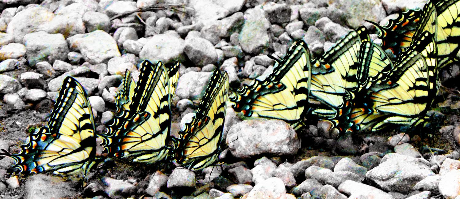 - Butterfly parade - Techno-Impressionist Museum - Techno-Impressionism - art - beautiful - photo photography picture - by Tony Karp